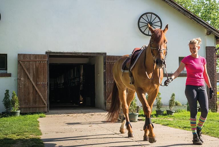 Pferde kaufen und Pferde verkaufen | Pferdemarkt ehorses.de