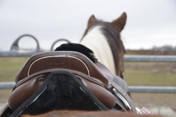 Hinterzwiesel eines Sattels auf dem Pferderücken mit der Stübben Streamline Schabracke drunter