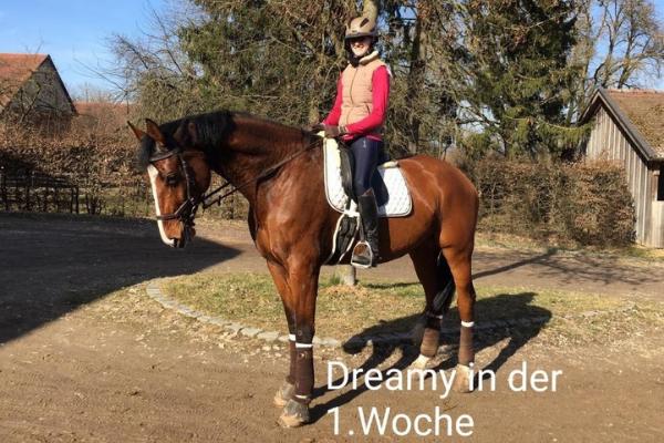 Standbild Pferd und Reiter