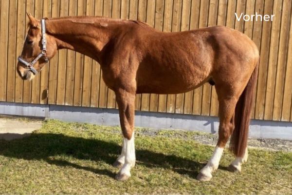 Pferd im Seitenbild im Stand Vorher
