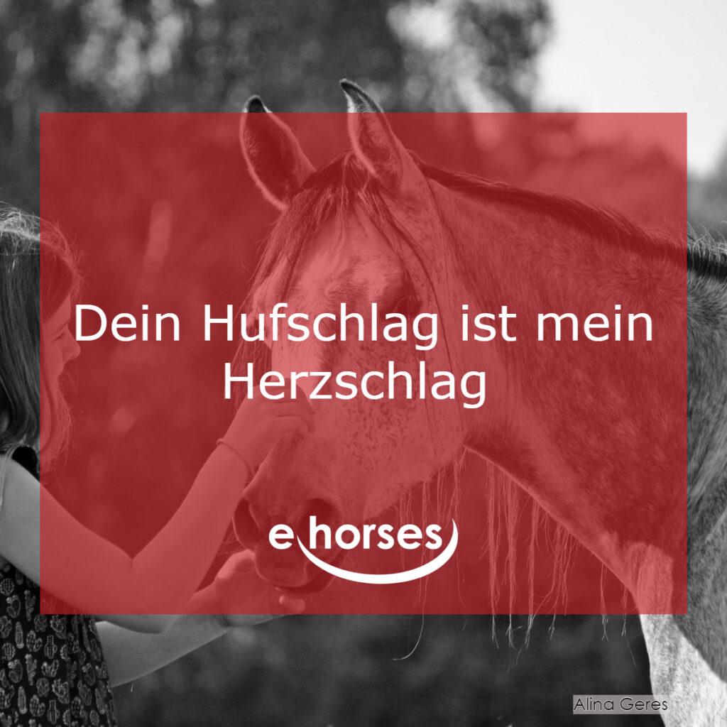 Pferdspruch Hufschlag