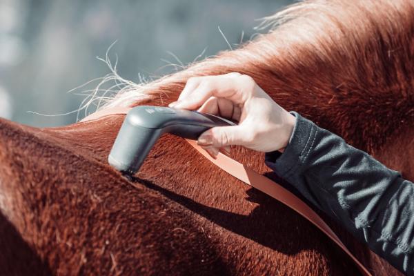 Das NOVAFON power wird am Rücken eines Pferdes eingesetzt
