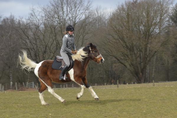 Galoppierendes Pferd auf einer Wiese