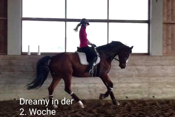 Pferd im Galopp im Seitenbild