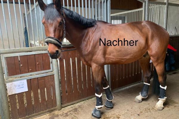 Pferd Seitenbild mit Kopf auf der Stallgasse