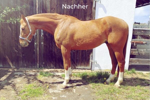 Pferd im Seitenbild im Stand Nachher