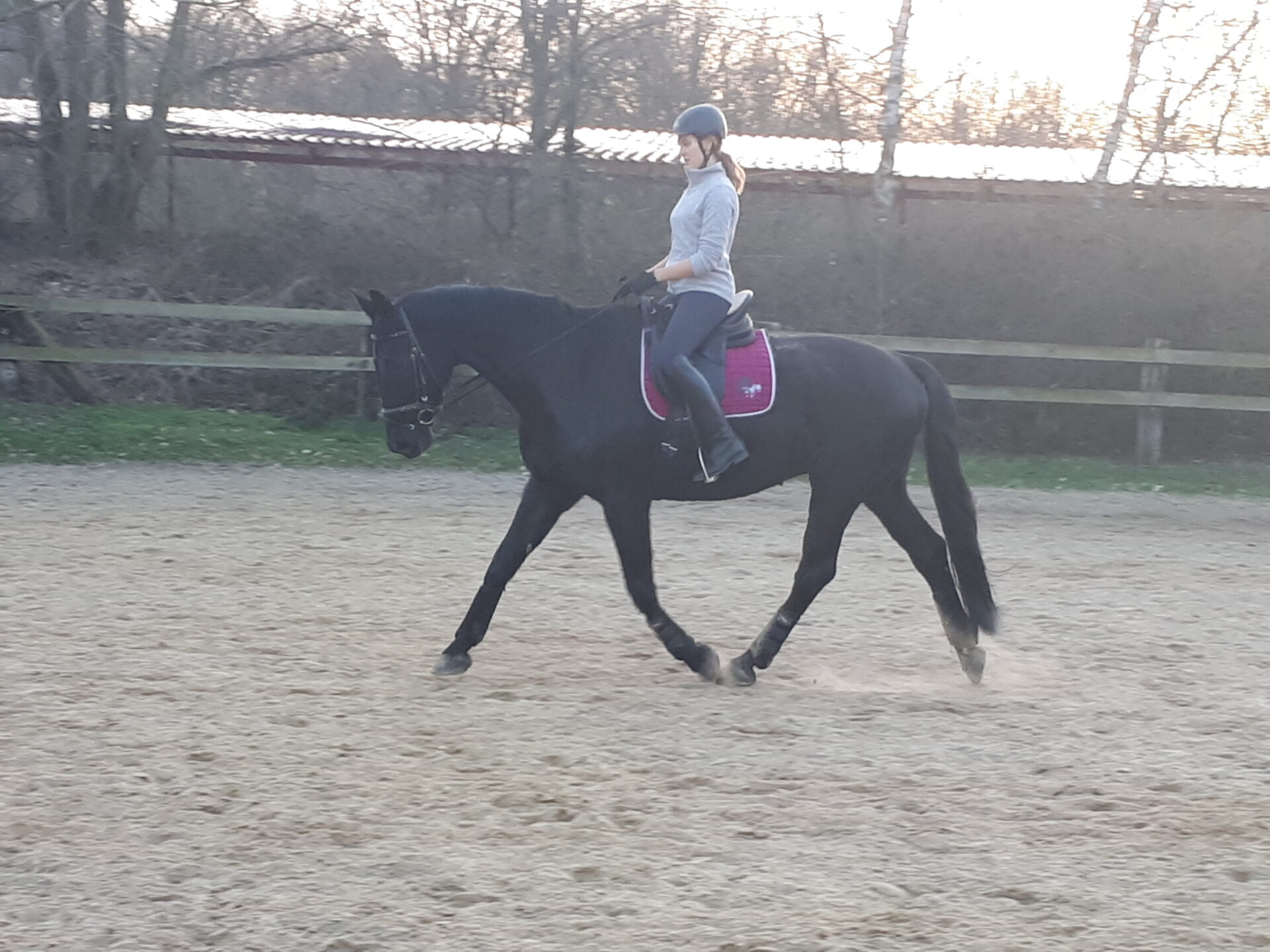 Ein Pferd wird im Trab von seiner Reiterin auf dem reitplatz geritten