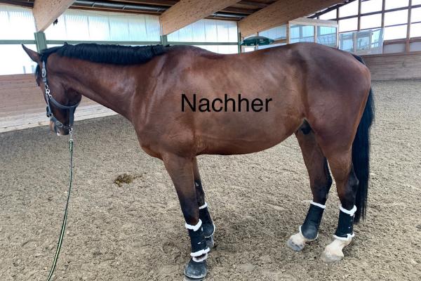 Pferd Seitenbild nachher Vergleich mit derbymed