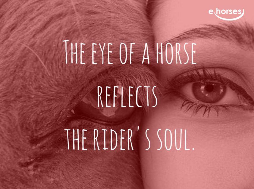 Pferdezitat horse exe reflect riders soul