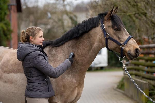 Die Halsmuskulatur wird mit dem NOVAFON power am Pferd gelöst