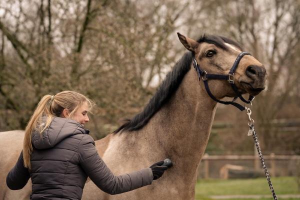 Das Pferd fühlt sich sichtlich wohl mit dem NOVAFON power am Hals und streckt sich