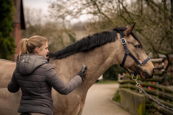 Das NOVAFON power wird am Hals des Pferdes eingesetzt