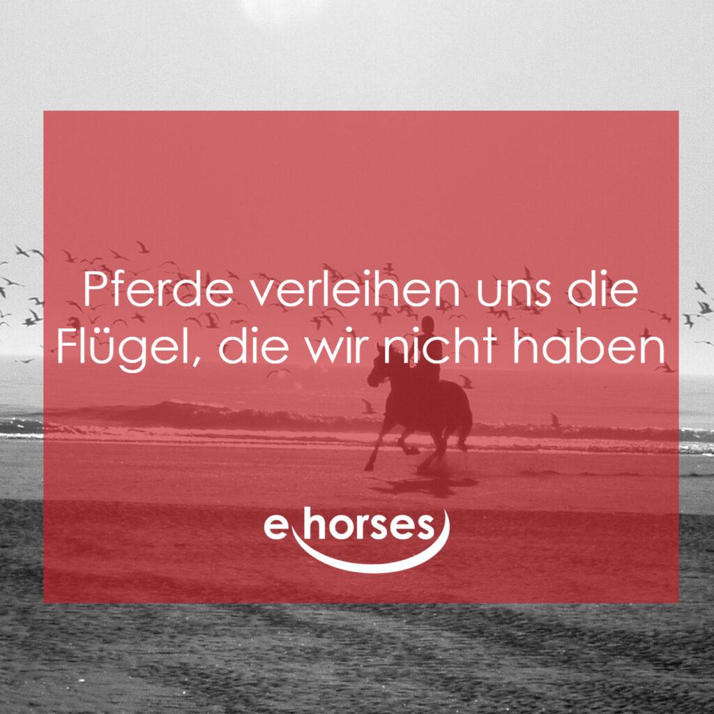Pferdezitat Pferde verleihen Flügel