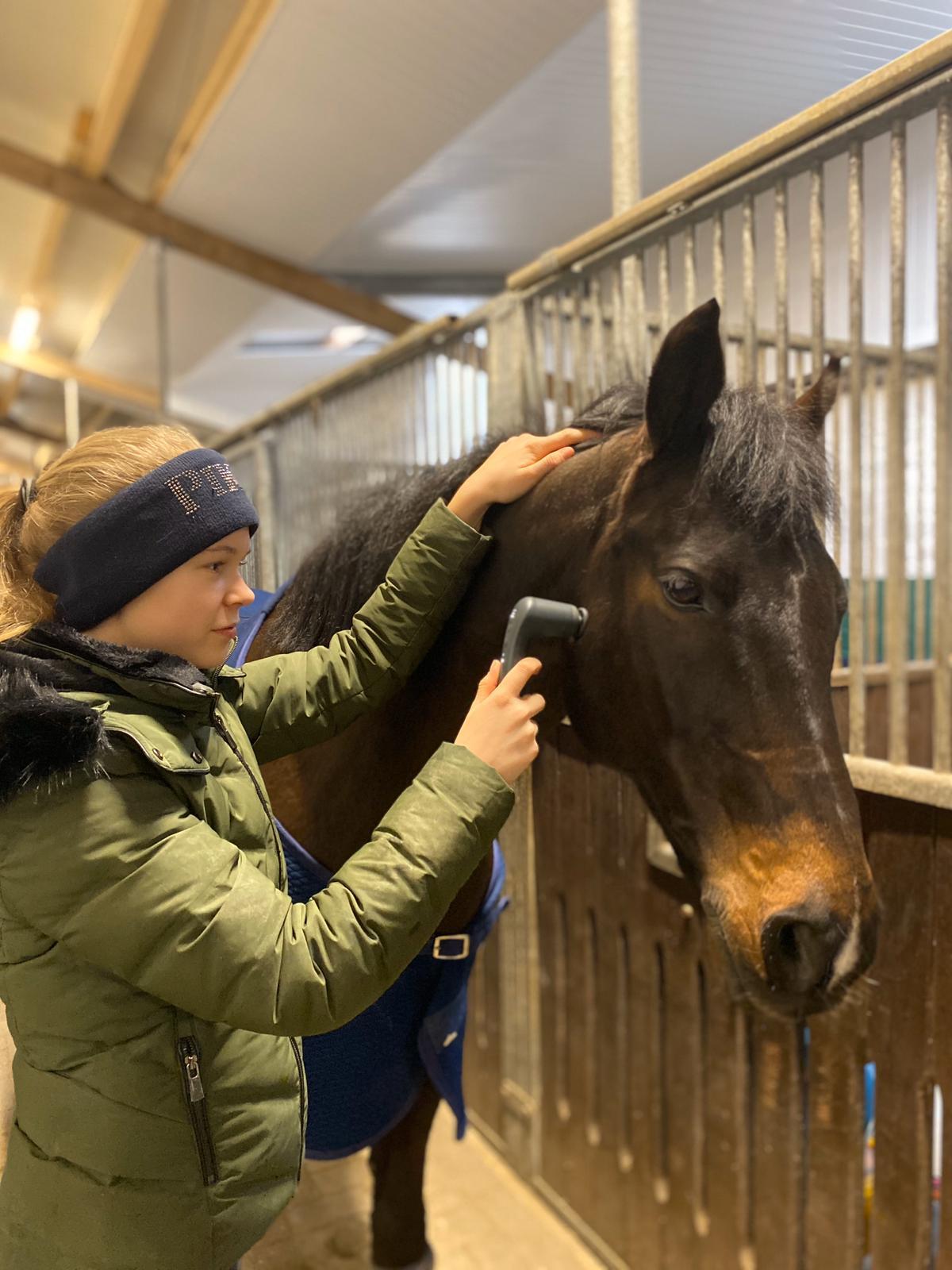 Das NOVAFON power wird von der Testerin am Kopf des Pferdes angewandt