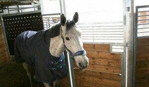 Führanlage Pferd: Pferd in Anlage