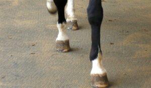 Führanlage Pferd: Boden