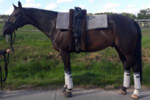 Equine Microtec