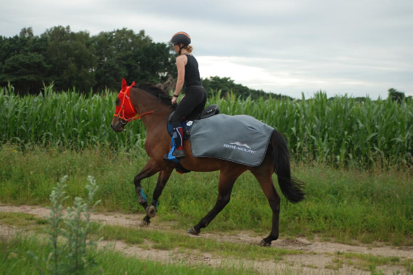 Equine-Microtec Funktionsnierendecke