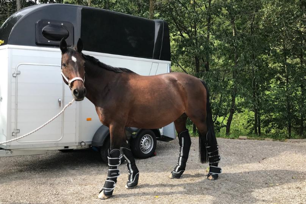 Equine-Microtec Transportgamaschen