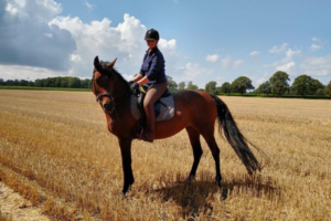 Equine-Microtec Schabracke