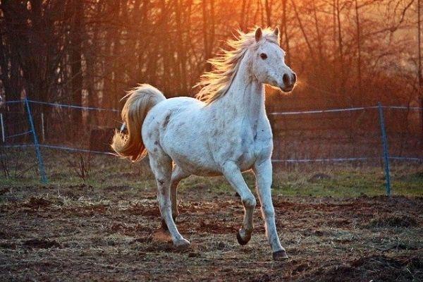 Eiliges Pferd kontrollieren: Weißes Pferd auf einer Wiese