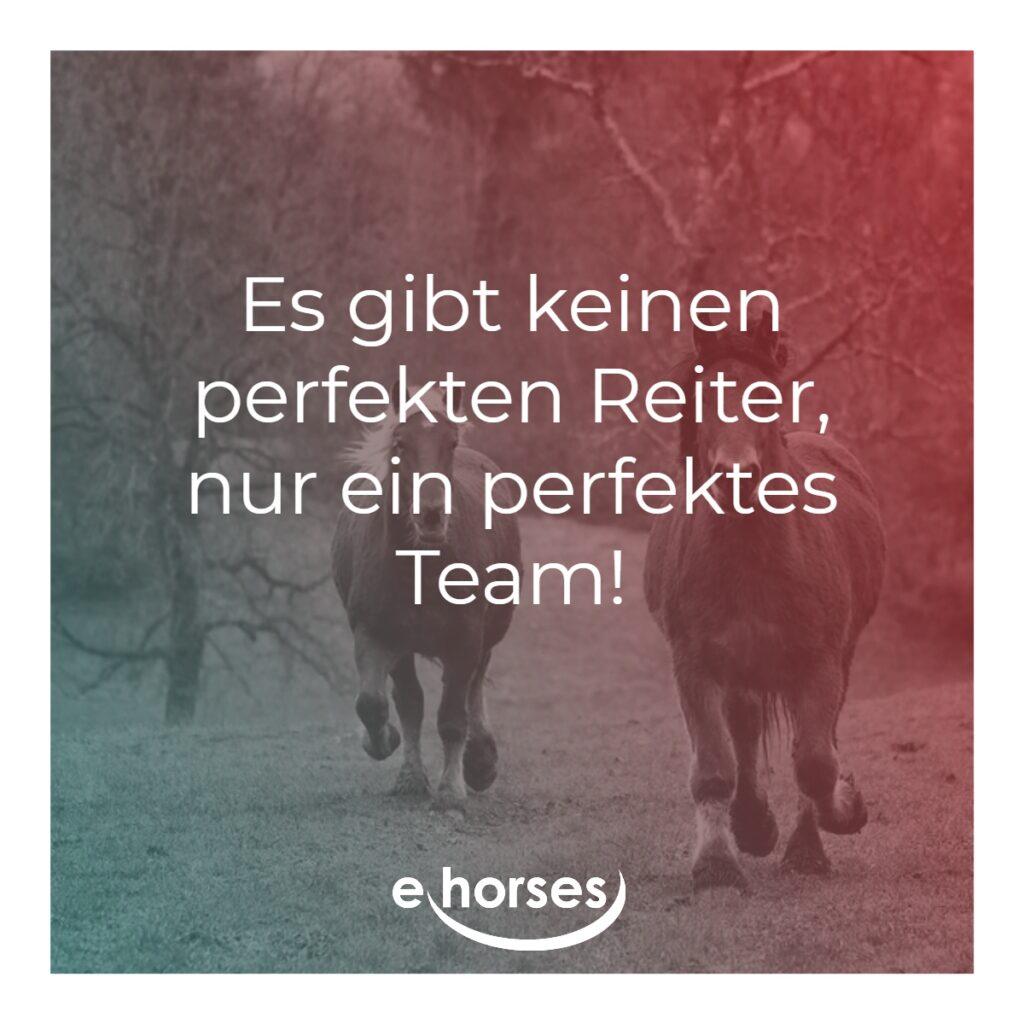 Pferdespruch es gibt keinen perfekten Reiter