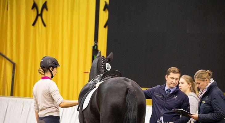 Verdener Auktion: Pferd in der Halle