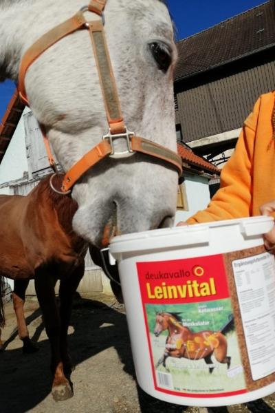 Produkttest-Deukavallo-Leinvital-Futter-Pferdefutter-Schimmel