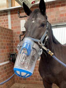 SaHoMa Inhalationsgerät am Pferd