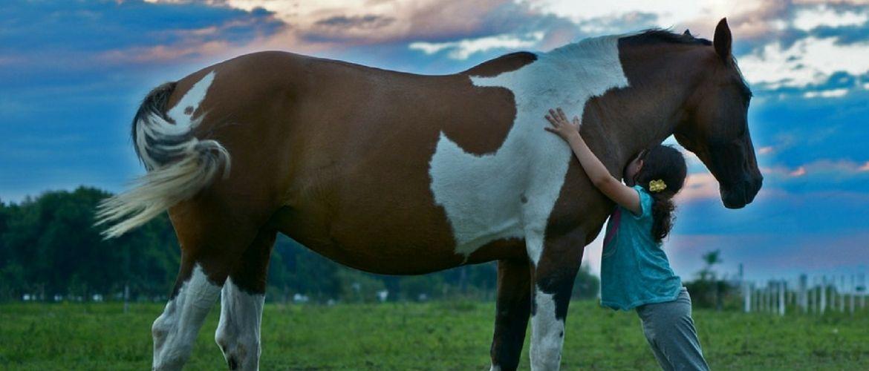 Vorteile vom Reiten: Braunes Pferd und junges Mädchen auf einer Wiese