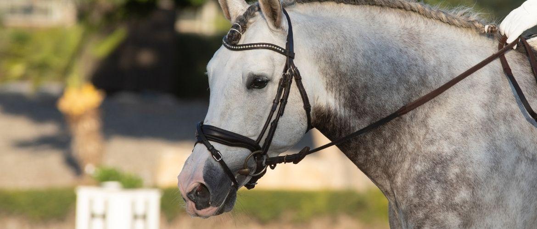 Spanische Pferde: Andalusier in der Natur