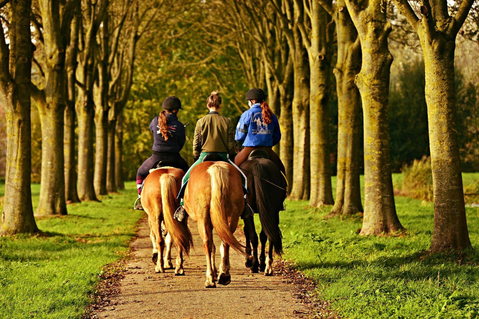 Pferde im Straßenverkehr