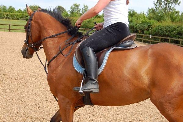 Balance Pad Pferd Training