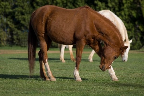 Balance Pad Pferd Wirkung