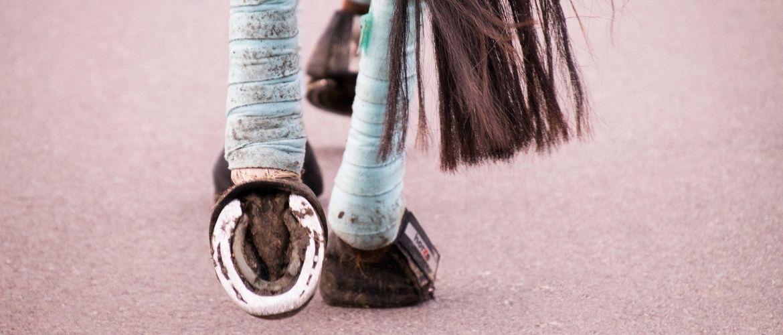 Bandage beim Pferd