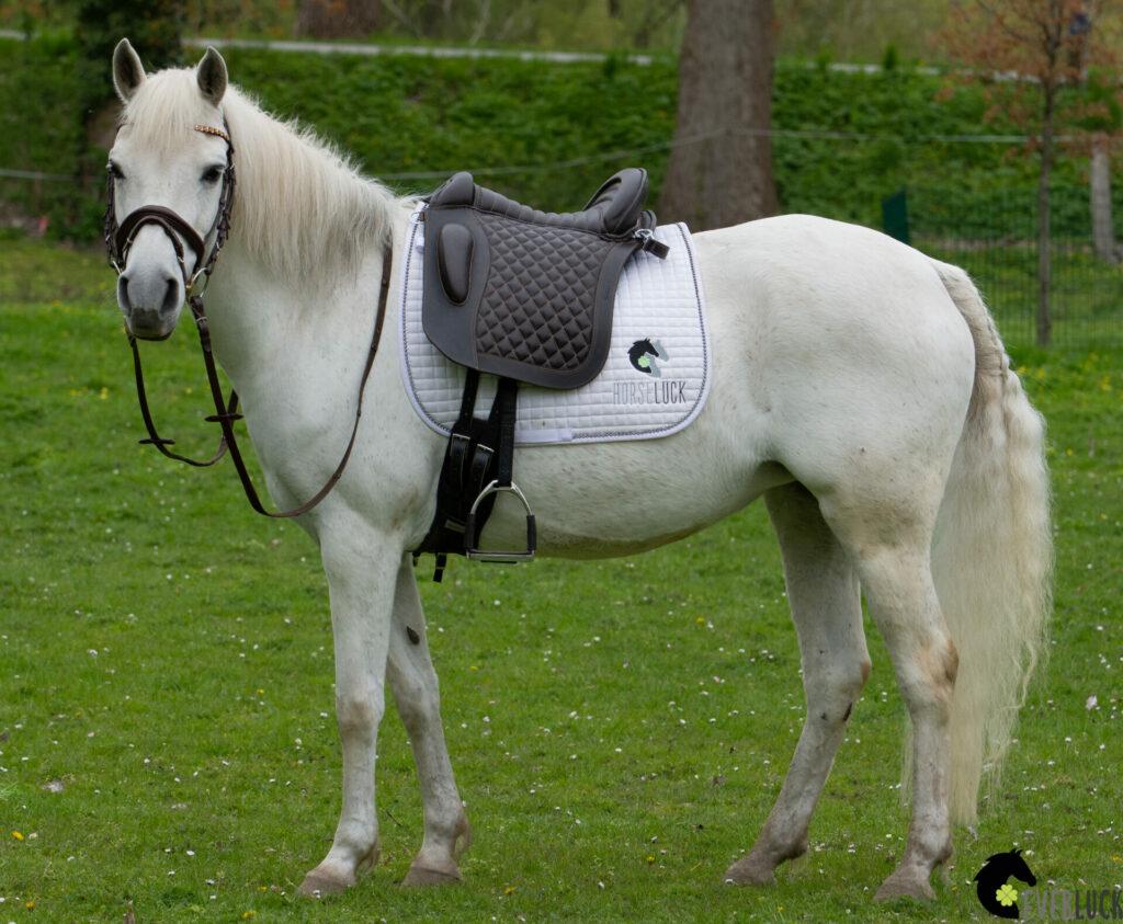 baumloser-sattel-everluck-famous-pony