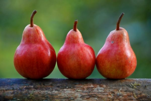Obst und Gemüse für Pferde: Birnen für Pferde