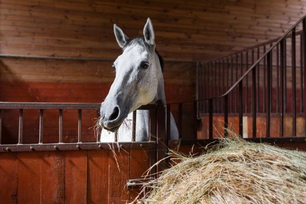 durchfall-pferd-raufutter (1)