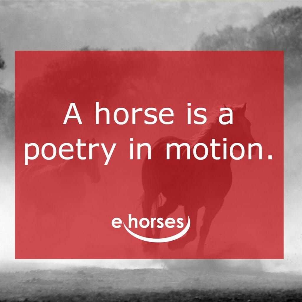 Pferdezitat horse is poetry in motion