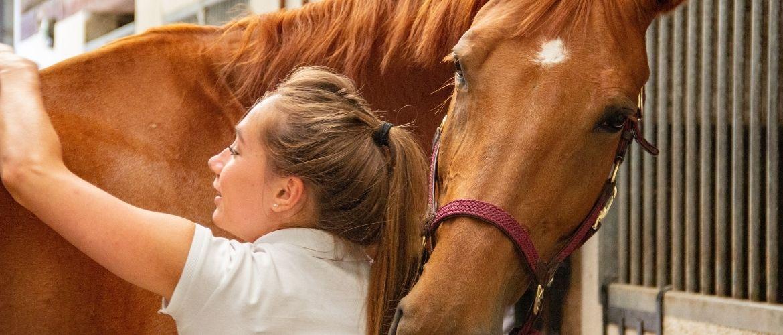 Frau pflegt Pferd