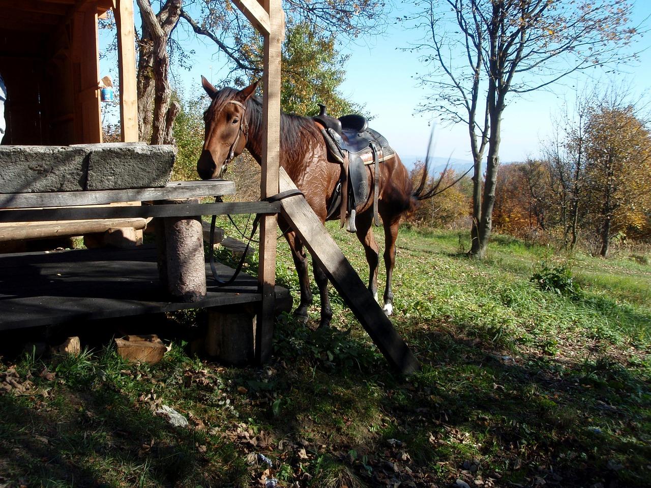 Wandern mit Pferd Ausrüstung