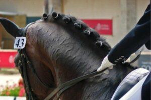 Pferdefrisuren Klassische Turnierzöpfe Pferd