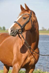 kraeuter-fuer-pferde-pferd-vor-wasser (1)