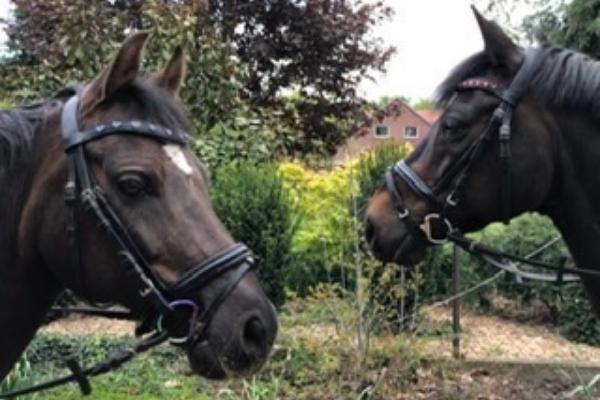 Pferde in der Natur