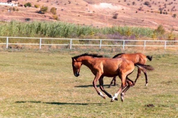 Muskeln aufbauen bei Pferden
