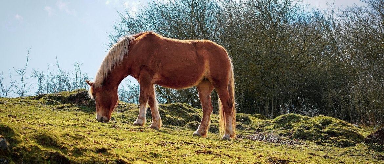 Pferd auf einem Hügel am Grasen