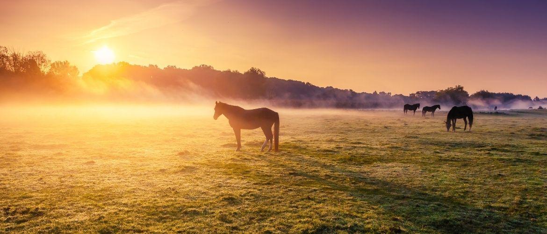 Urlaub mit Pferd: Pferde bei Sonne auf Weide