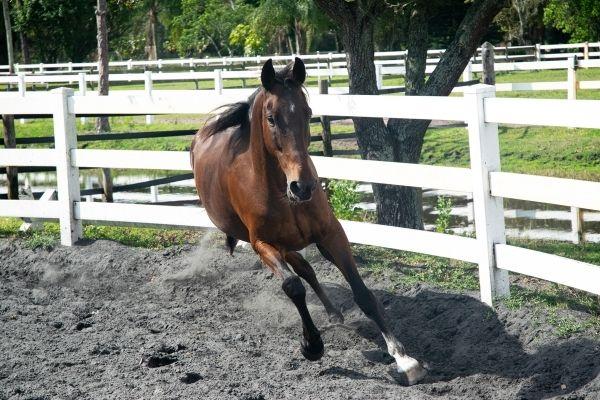 Pferd beim Auslauf