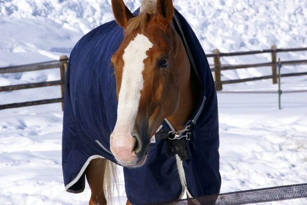 Pferd mit blauer Decke im Winter