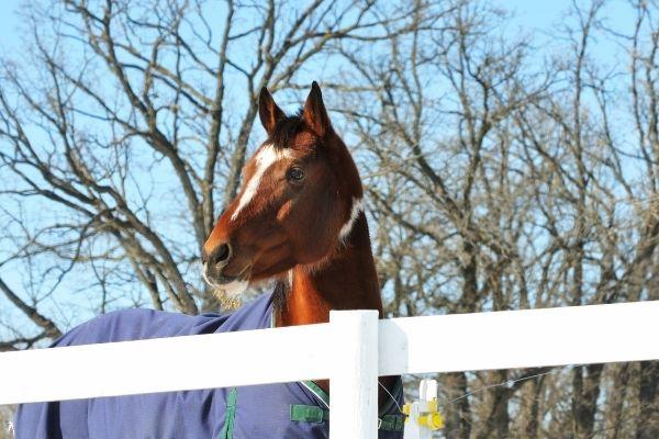 Pferd eindecken: Vierbeiner mit blauer Decke